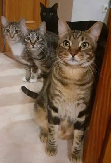 Mila Machuca en Hamelin: Fauna, #Gato #Cat