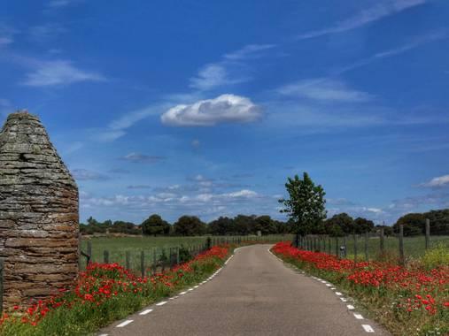 mariale en Hamelin: Paisaje, 📸 #marialemdza  #amapolas #amapola #paisaje #paisajes #landscape #BellezaNatural #FloresSilvestres Provincia de Zamora, prim...