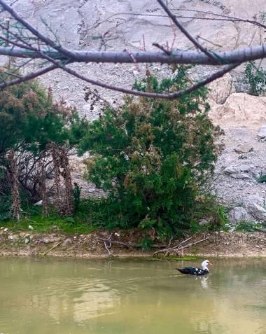 carogv1995 en Hamelin: Fauna  (Campos del Río), #pato #flora21 #riachuelo