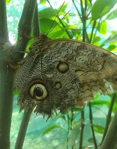 lywcava en Hamelin: Fauna
