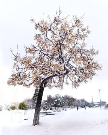 jd-jp en Hamelin: Paisaje  (Rivas-Vaciamadrid), #invierno20