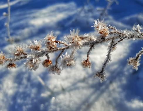 Manelsersol en Hamelin: Paisaje  (Olot), #Invierno20 #Inviermo2020 #Nevadas #hielo  Fuertes Heladas en Olot.La Garrotxa..