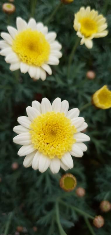 Nuriacifort en Hamelin: Flora, #florals