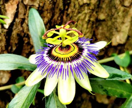 Viriv03 en Hamelin: Flora  (San Nicolás), #supermacro #flor
