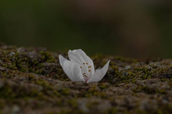 Mónica del Monte en Hamelin: Flora, #flora21