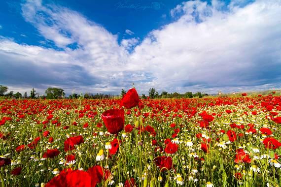 Florentinoeugenio en Hamelin: Paisaje  (Mejorada del Campo), #campodeamapolas