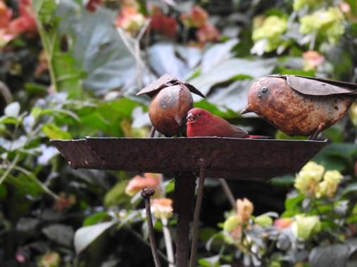 olaya96fg en Hamelin: Fauna  (Nairobi), #Aves21