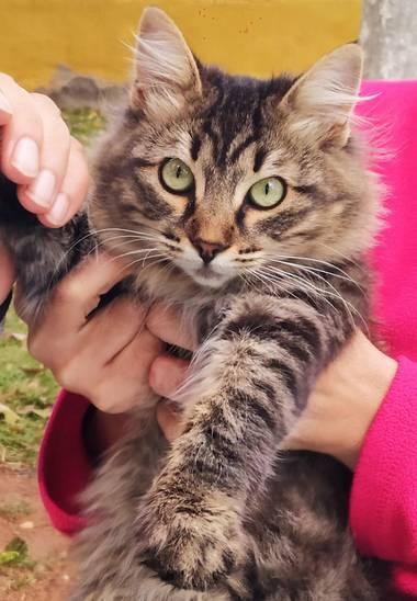 Ajreinapacheco en Hamelin: Fauna  (Humilladero), #gato