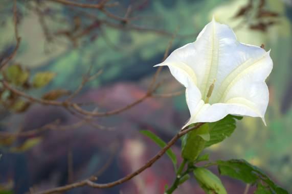 Naturalmente en Hamelin: Flora  (Fanzara), #flora21 #primavera #flor