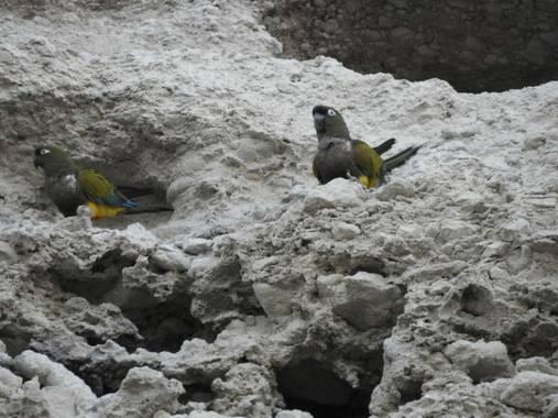Rodrigo Tejeiro en Hamelin: Fauna  (Balneario Las Grutas), #aves21