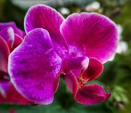 Naomi en Hamelin: Flora  (Barcelona), Phalaenopsis spp., #flores 🌸