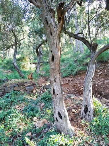 Yob93 en Hamelin: Paisaje, #monte #arboles #naturaleza #malaga