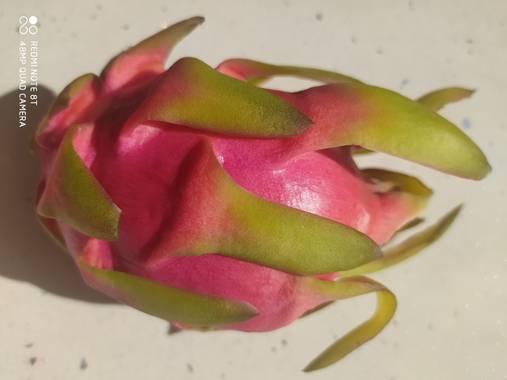 Estherilla333 en Hamelin: Flora  (Linares), Hylocereus undatus, Hoy he descubierto esta fruta, tiene múltiples cualidades y aportes muy beneficiosos para l...