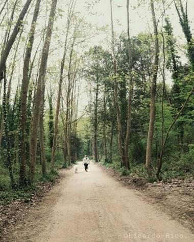 Rricoparrillas en Hamelin: Paisaje  (Dosrius), Paseo por el bosque. #bosquesdecatalunya #bosque #dosrius #catalunya
