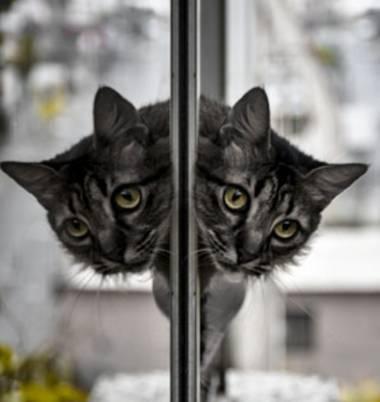 José Viana en Hamelin: Fauna  (Caracas), #gato #gatito #felino #reflection