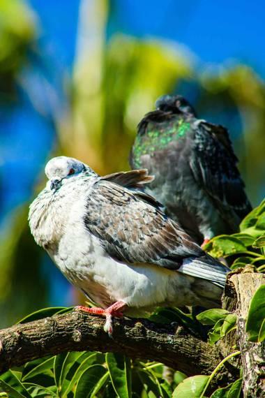 PEROMA_PHOTO en Hamelin: Fauna