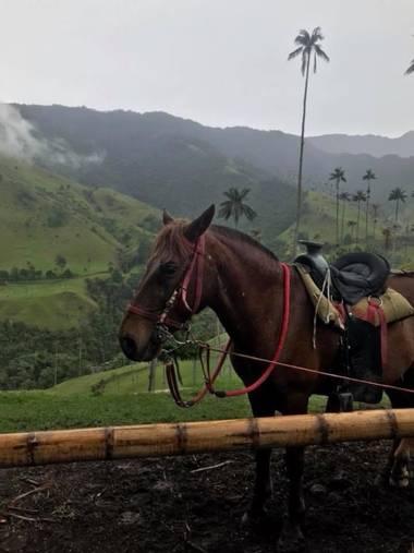 Paulagomezsancl en Hamelin: Fauna  (Salento), #🇨🇴 MEMORIES #colombia #valledelcocora #paisajes #fauna #maravillasdelmundo #tierraquerida #🌴