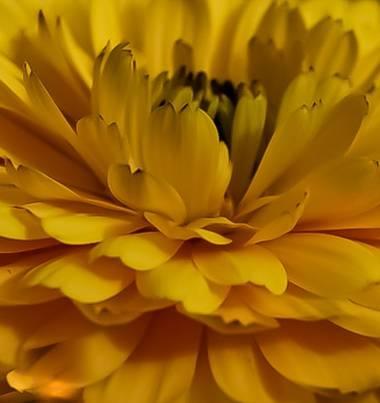 Cristobal.cadenas en Hamelin: Flora  (Badalona), #flora21  #naturecolors  #nature_good  #naturacatalunya