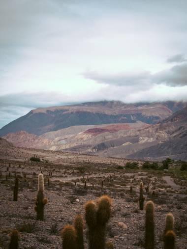 Pikeriel en Hamelin: Paisaje, #landscape #paisaje #cactus #desert #desierto