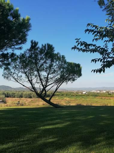 Pil_artero en Hamelin: Paisaje  (Puebla de Vallbona), #parquesyjardines