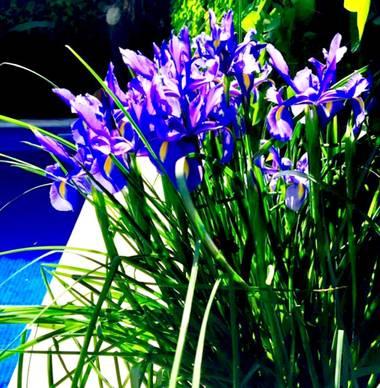 su en Hamelin: Flora  (Gelves), 🌞🌞