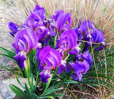 Helenbell33 en Hamelin: Flora  (Borriol), #floresdelamontaña #desiertodelaspalmas #castellon