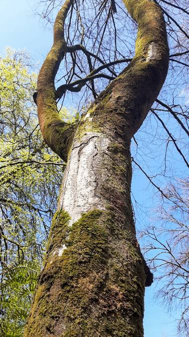 Conchivh en Hamelin: Flora  (Oviedo), #flora21