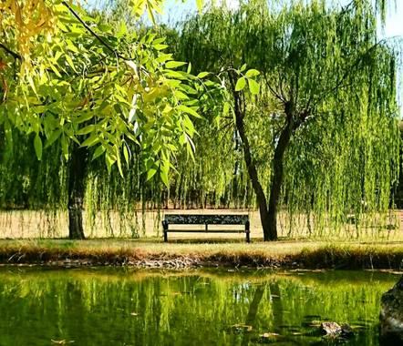 Beasaoton en Hamelin: Paisaje  (Casavieja), Los sauces lloran de soledad 😥 Parque Las Lagunillas en Casavieja  #parquesyjardines #parque #saucelloron #flo...