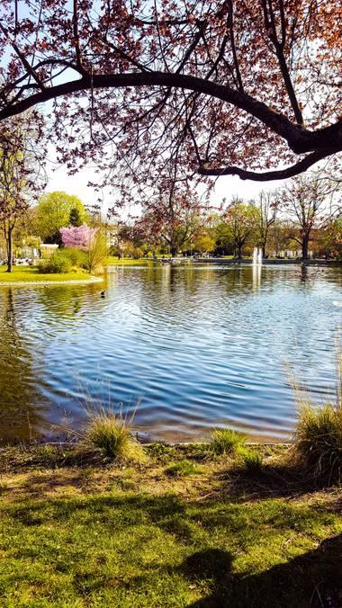 _as_d65  en Hamelin: Paisaje  (Mitte), #lago #verde #paisaje #naturaleza 💦💚
