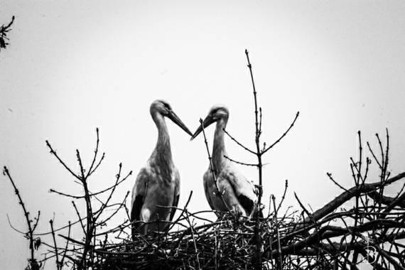 Conbyconv en Hamelin: Fauna, #aves21