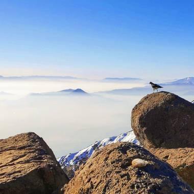 Rody en Hamelin: Fauna  (San José de Maipo), A little falcon looking at the abysm of Los Andes #aves21  #Aves21