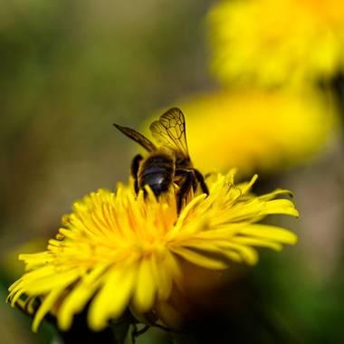 rqsalcedo en Hamelin: Fauna  (Coslada), #abejas