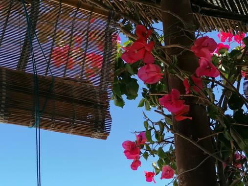 @sinaceramica en Hamelin: Flora  (San Francisco Javier), #buganbilla #formentera @sinaceramica