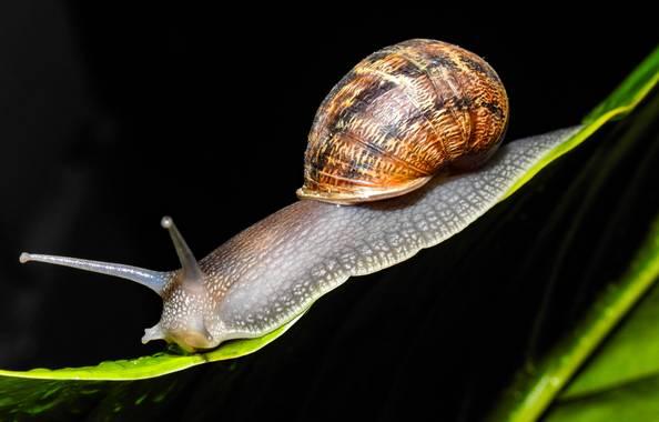 saganias42 en Hamelin: Fauna, #caracol