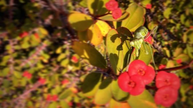 Azulagart en Hamelin: Fauna  (Sevilla), Un polizón entre las flores y las espinas abordó este plano al manto del calor del momento, escondido a plena vista...