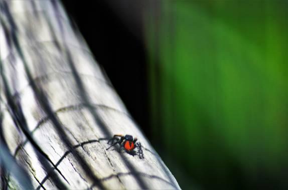 Azulmarino  en Hamelin: Fauna  (Toses), Cada cual en su Mundo #naturaleza #araña #spider #frommypointofview