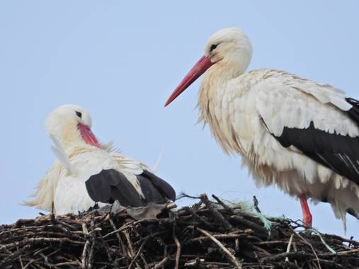 Edrevercas en Hamelin: Fauna  (El Piñero), Por San Blas... #aves21