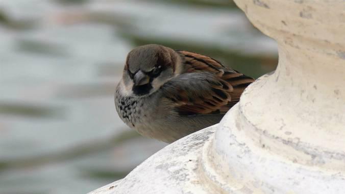 Liliane.chinyavong en Hamelin: Fauna  (Madrid), #Aves21