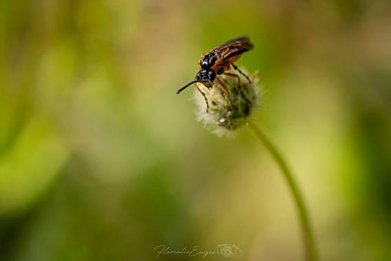 Florentinoeugenio en Hamelin: Fauna  (Coslada), #bugs