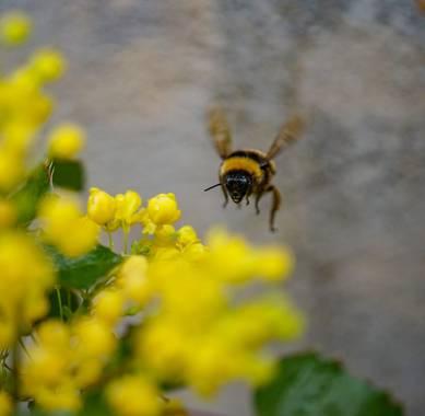 rqsalcedo en Hamelin: Fauna  (Madrid), #abejas