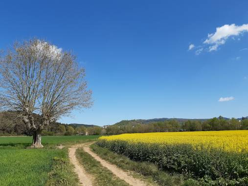 Manelsersol en Hamelin: Paisaje  (Olot), Campos de Colza en la Garrotxa Olot. Abril 2021. #parquesnaturales #Paisajes #paisajesnaturales #Flores #Flora #Ca...