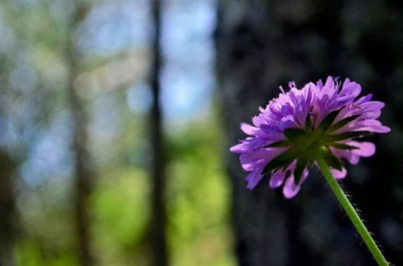 Azulmarino  en Hamelin: Flora  (Planoles), Entre lineas #frommypointofview #flora #naturaleza #verde #purpura