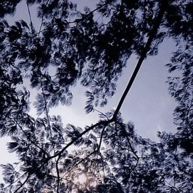 Sherlynvelasquez402 en Hamelin: Flora, #arbol #naturaleza