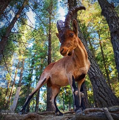 Daniel87marin en Hamelin: Fauna, #animales20 #invierno20 #wildanimalsnotpets #wildanimals #forest  #wildlifephotographer #nature #natur  #naturaleza #natu...