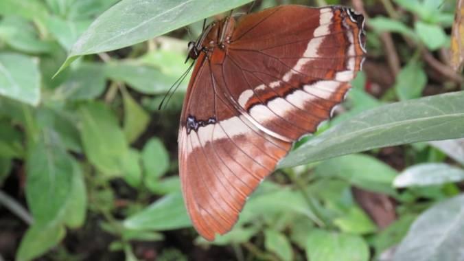 Jesudavid19 en Hamelin: Fauna