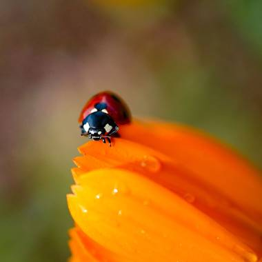 rqsalcedo en Hamelin: Fauna  (Madrid), #insectos