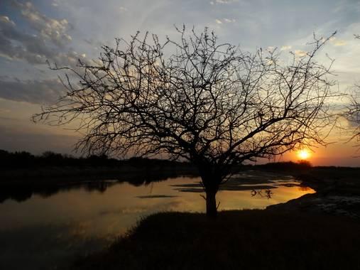flacamlau en Hamelin: Paisaje  (La Capital), Atardecer en el Río Salado, Llambi Campbell, Santa Fe, Argentina. El algarrobo, árbol fuerte, presente, tan ca...