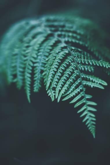 Garazi94 en Hamelin: Flora  (Derio), #flora21 #helechos #hojasverdes #darkness #nature