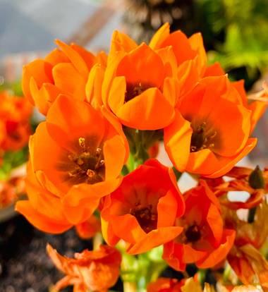 su en Hamelin: Flora  (Marbella), #flora21