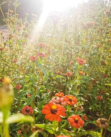 Marijohz en Hamelin: Flora  (Los Hornillos), Bañadas de sol